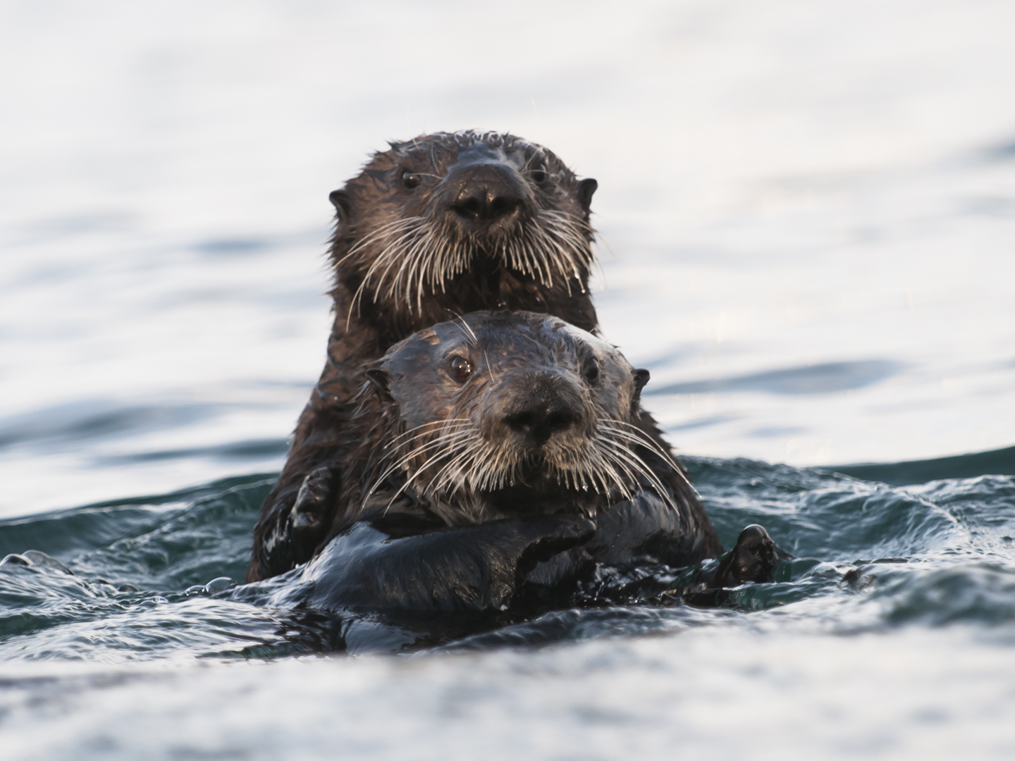 Hope for Kelp and more Marine Protected Area News